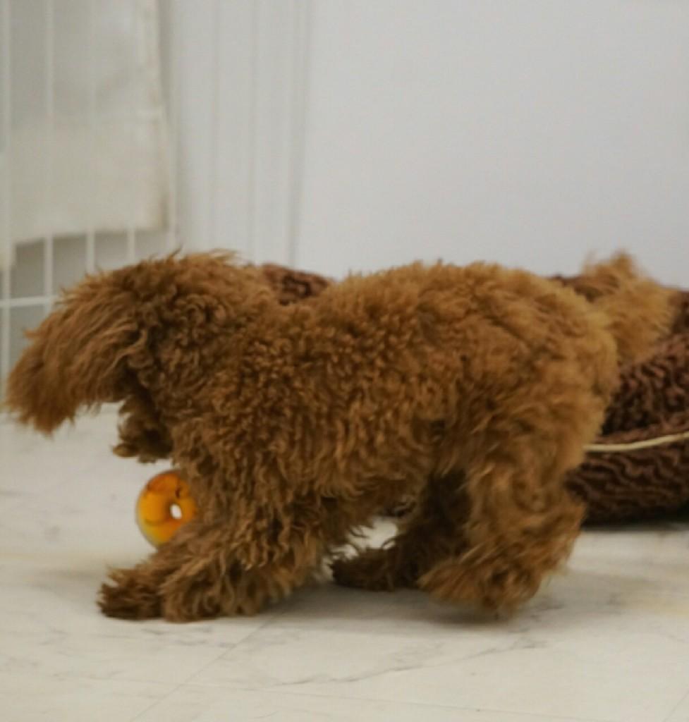 おもちゃ、グッズのブログ_5190