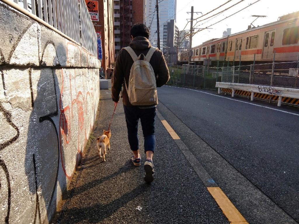 柴犬合宿 麦_3021