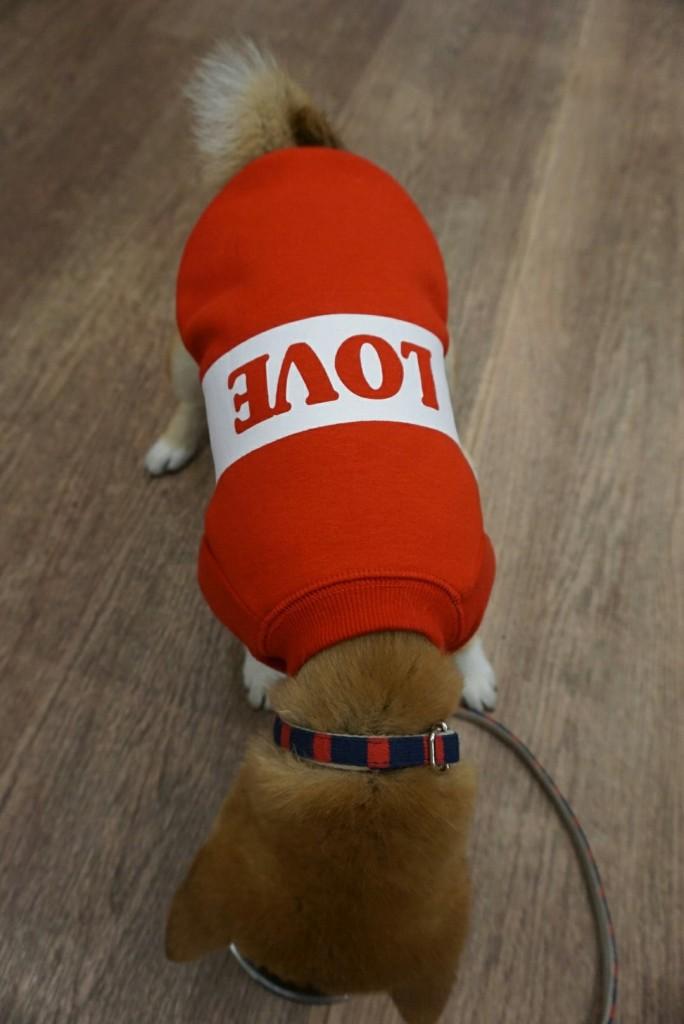 合宿 柴犬 がんも_1622