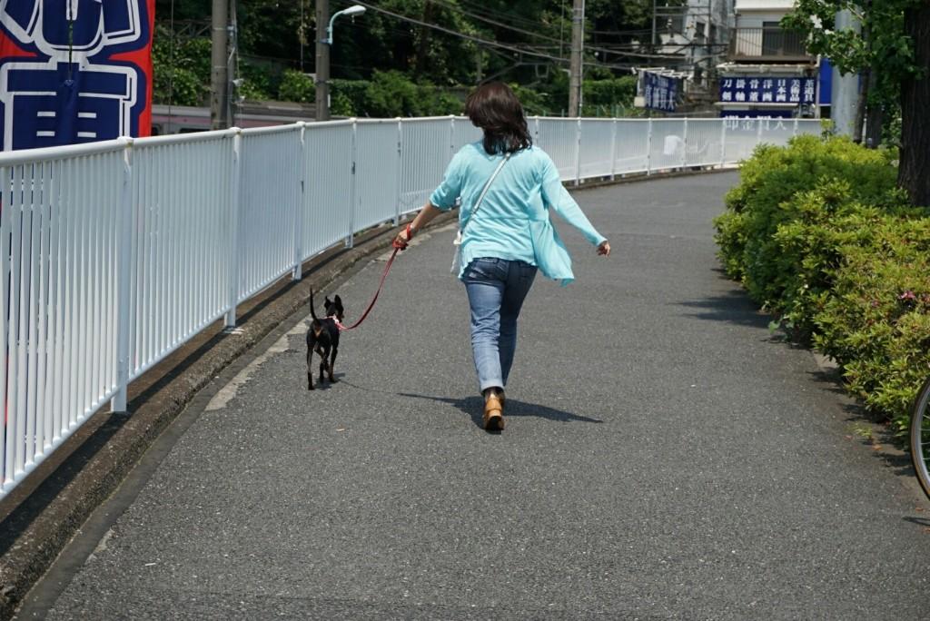トイマンチェスターテリア るーくん合宿_2253_0