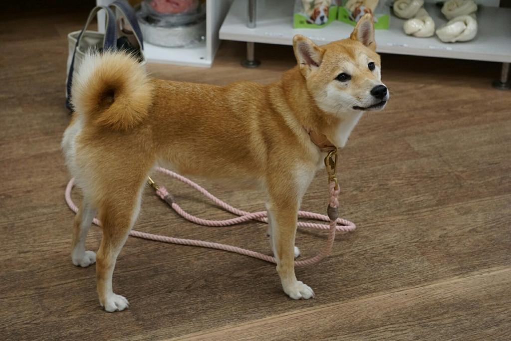 柴犬 はっぱ合宿_170728_0021