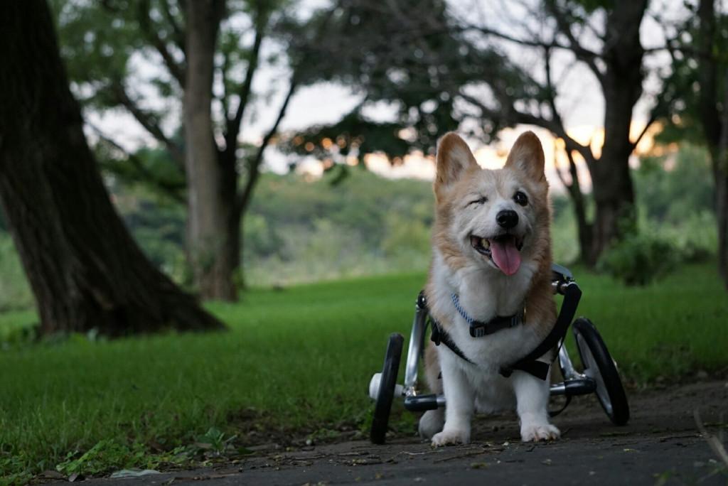 ジャック車椅子_171026_0008