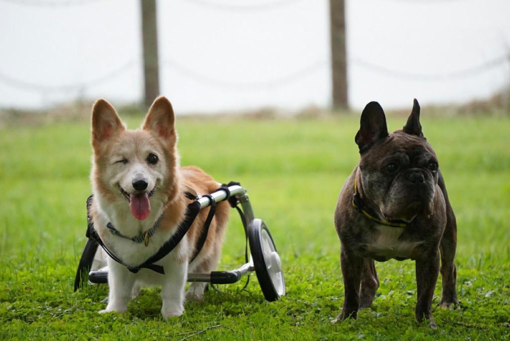 ジャック車椅子_171026_0016