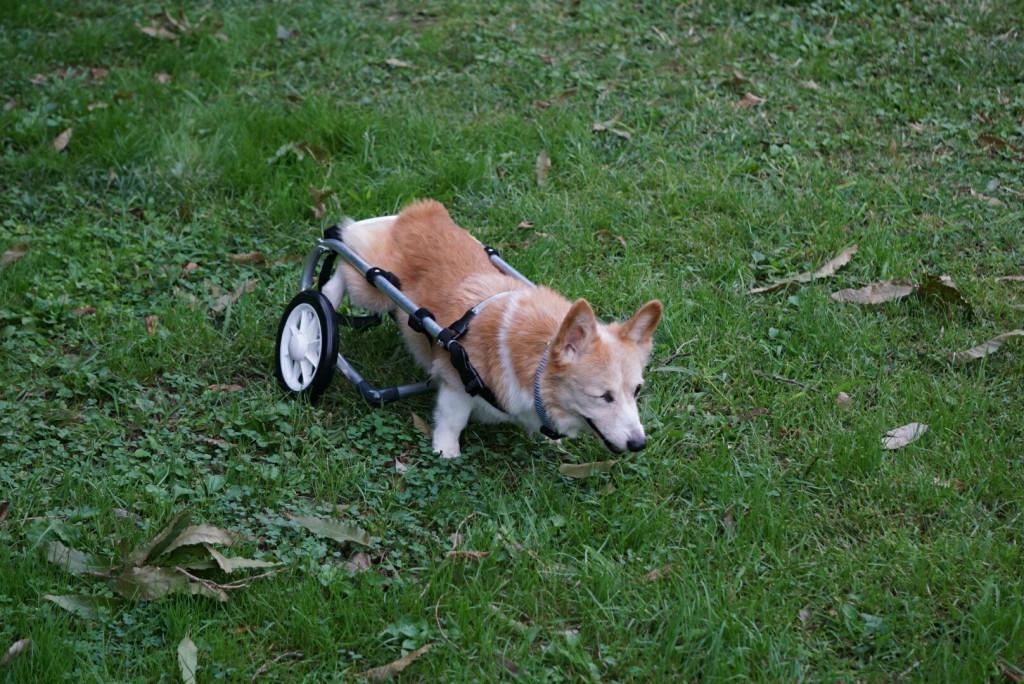 ジャック車椅子_171026_0035