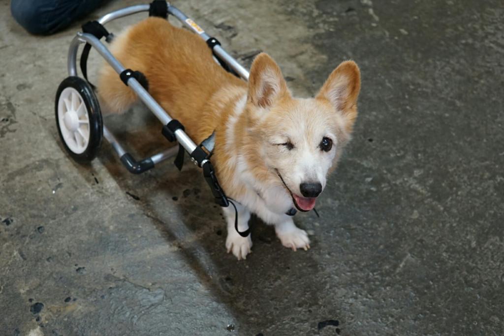 ジャック車椅子_171026_0037