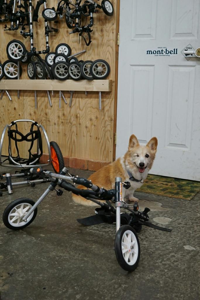 ジャック車椅子_171026_0045