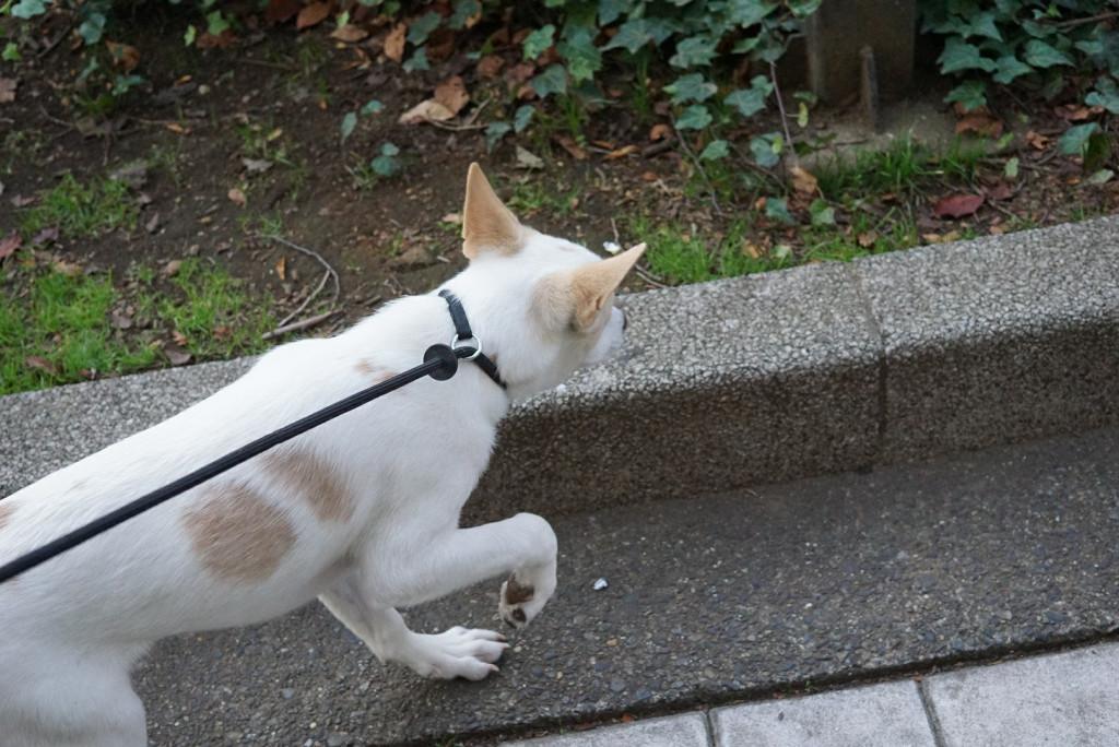 福岡 ハピネス合宿_171224_0058