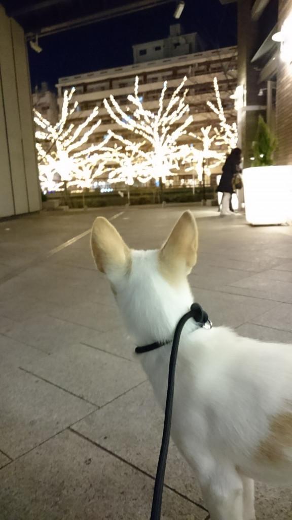 福岡 ハピネス合宿_171224_0096