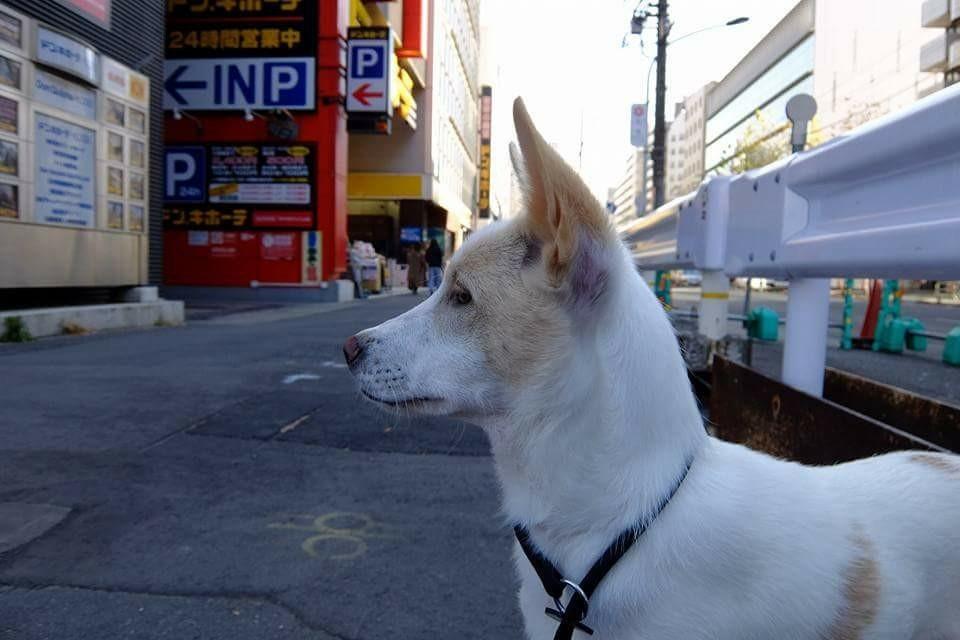 福岡 ハピネス合宿_171228_0118