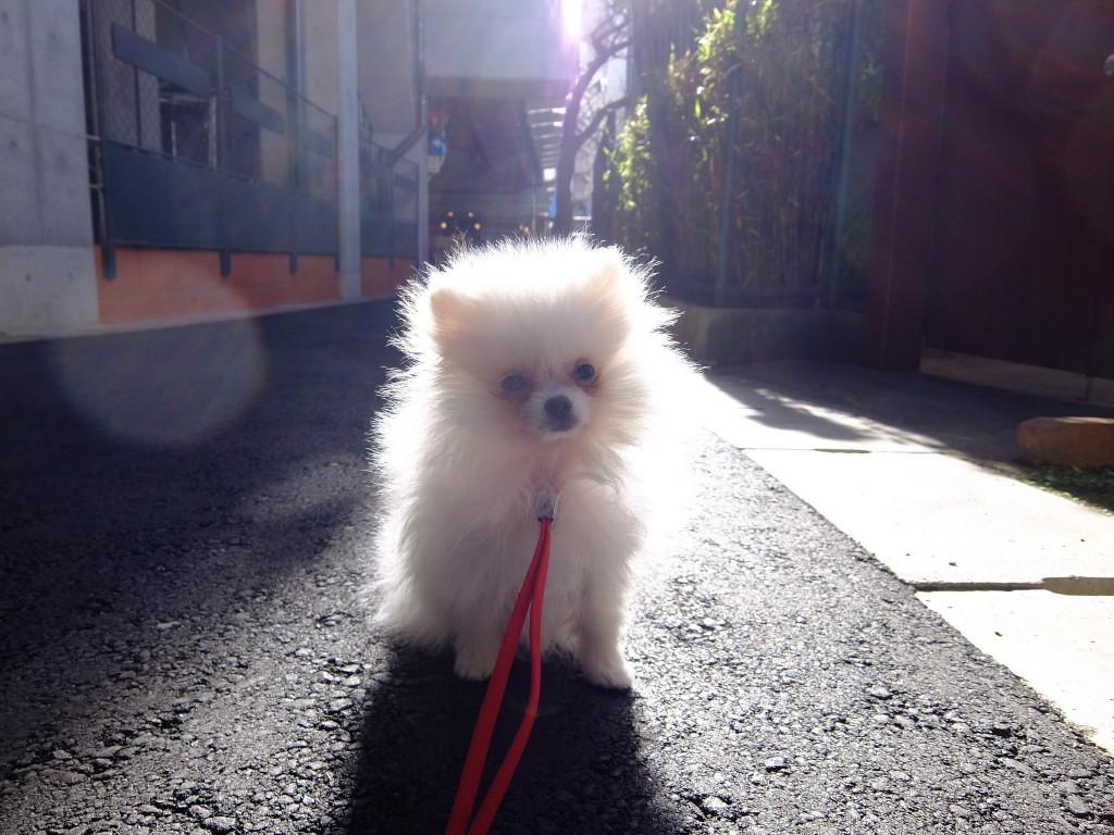 ホントに、子犬の時の琥二郎と同じで笑いました。