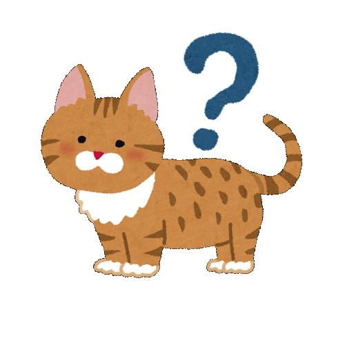 cat_question