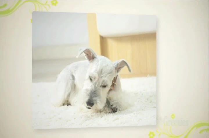 グリニーズ プラス エイジングケア 超小型犬用 2-7kg 6本入動画1