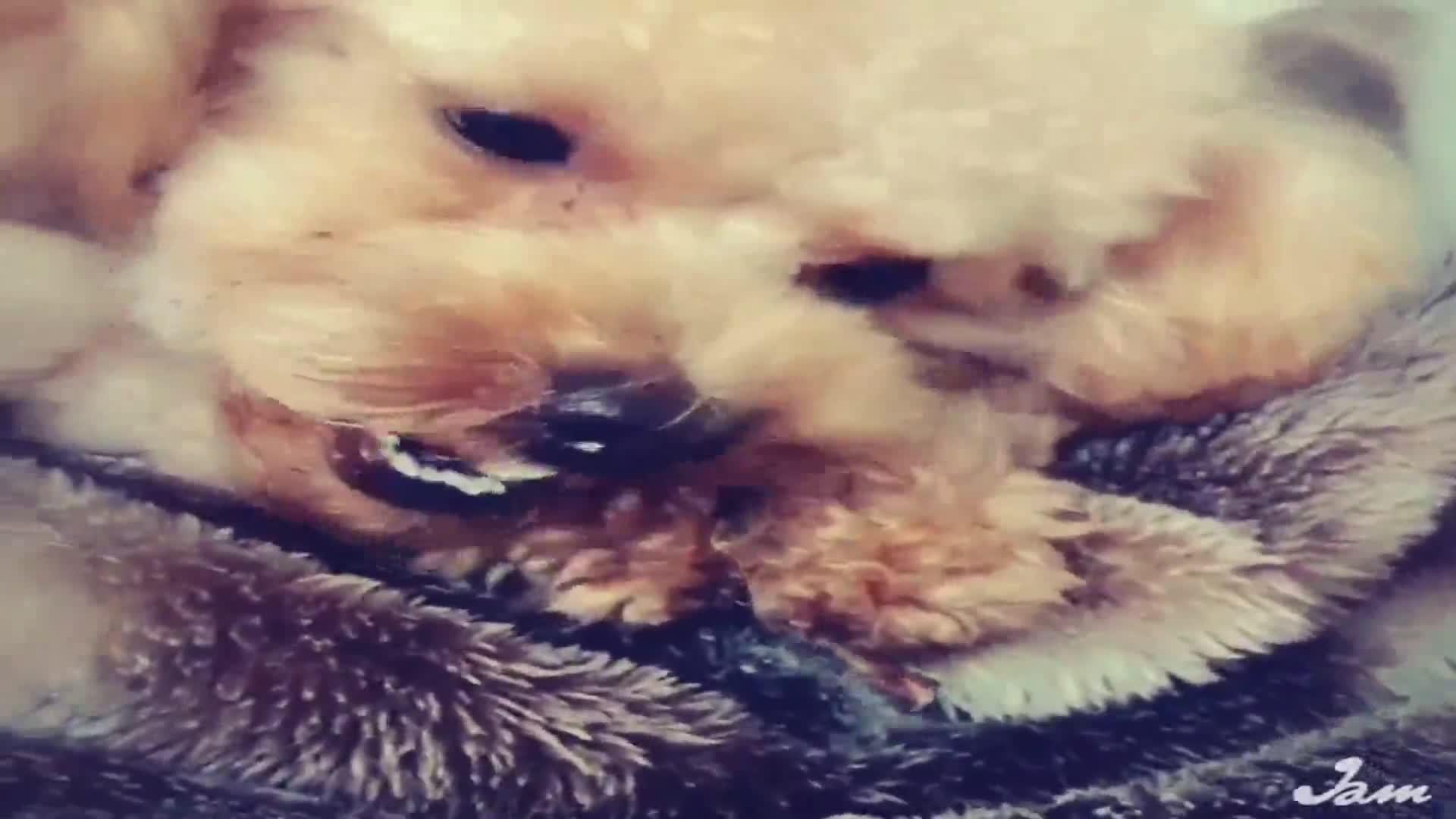 UGペット 純国産 無添加犬用おやつ 猪 肉付きあばら 40g動画1
