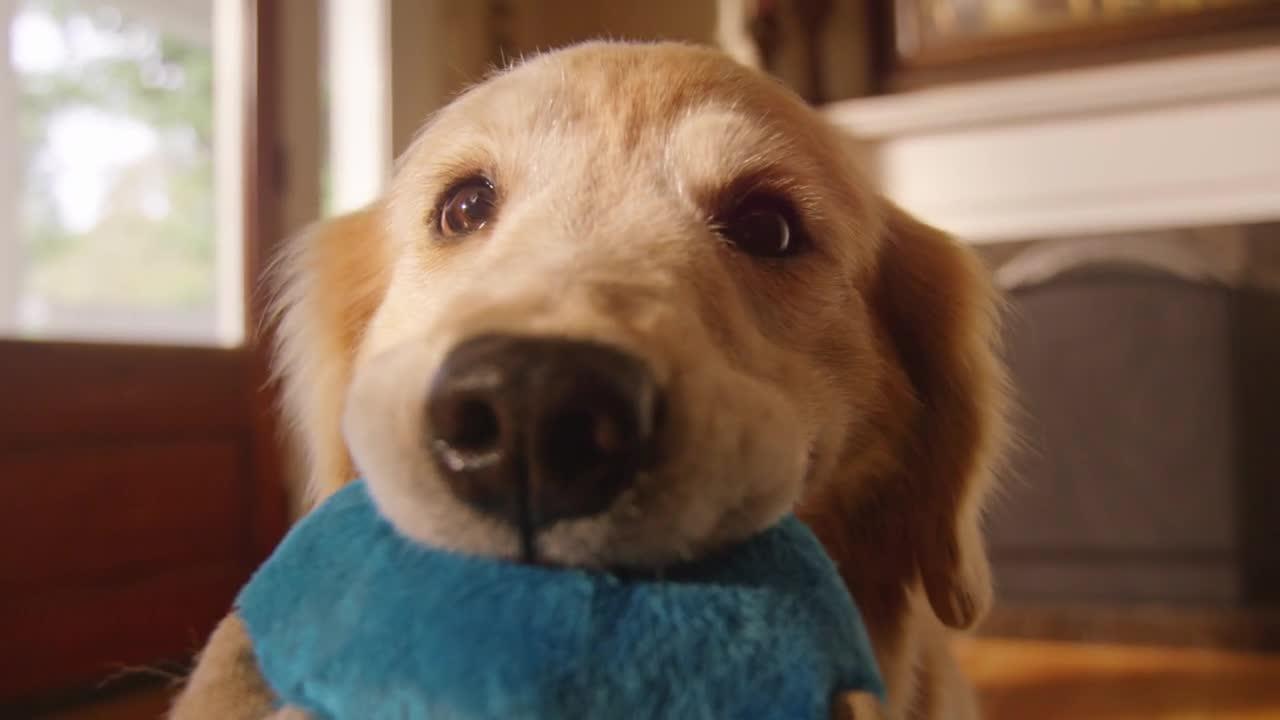 サイエンスダイエット プロ 犬用 健康ガード アクティブシニア 7歳以上 3kg動画1